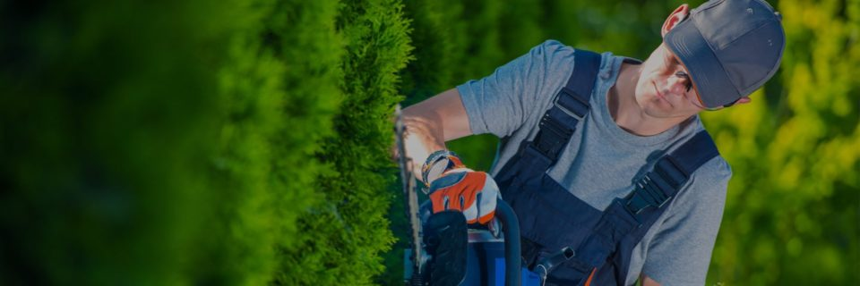 We Have Provided Commercial Landscaping